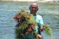 Upgrading Seaweeds Value Chain in the Philippines